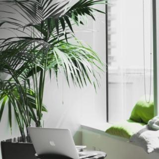 plantes_vertes_decoration